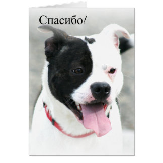 спасибо Thank You Staffordshire Bull Terrier Card