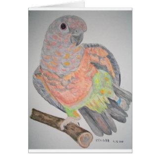 オウム パロットRed-bellied Parrot stretching Card