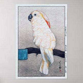 オオバタン・オウム, Salmon-crested cockatoo, Yoshida Poster