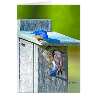 020 Bluebird Nesting Note Card 4.25x5.5 Matte