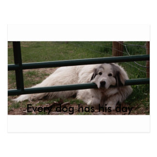 022_2, Every dog has his day Postcard