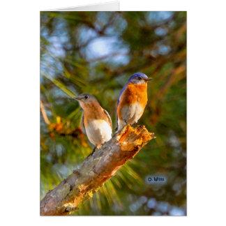 040 Bluebird Courtship Card 5x7 Matte