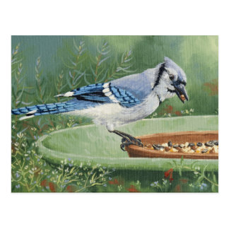 0481 Blue Jay at Feeder Postcard