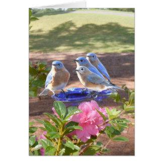 050 Bluebirds Forever Card 5x7 Matte