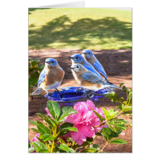 050 Bluebirds Forever Note Card 4.25x5.5 Matte
