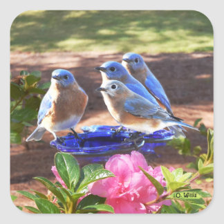 050 Bluebirds Forever Sticker 1.5x1.5 Sheet of 20