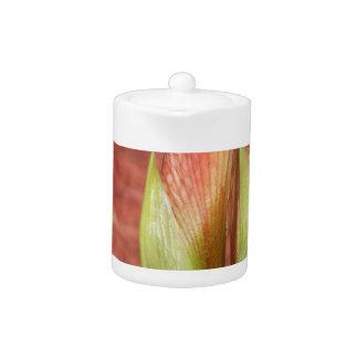102a Amaryllis Apple blossom bud