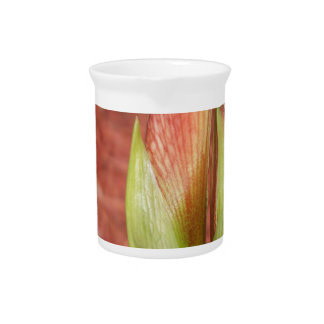 102a Amaryllis Apple blossom bud Pitcher