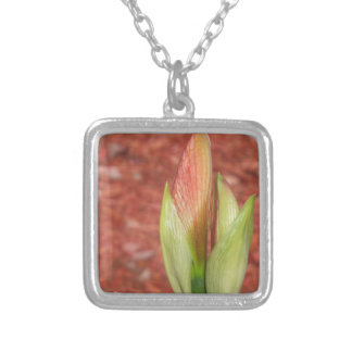 102a Amaryllis Apple blossom bud Silver Plated Necklace