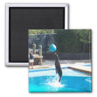 104_3686 - Seal Magnet