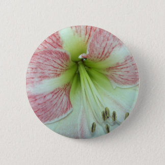 104a Amaryllis Apple Blossom open 2 2 Inch Round Button