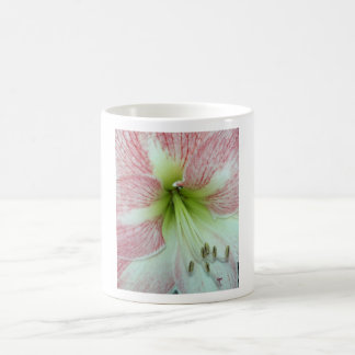 104a Amaryllis Apple Blossom open 2 Coffee Mug