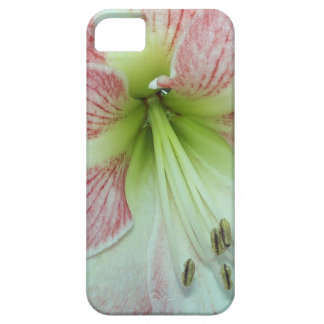 104a Amaryllis Apple Blossom open 2 iPhone 5 Cover