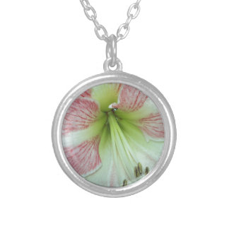 104a Amaryllis Apple Blossom open 2 Silver Plated Necklace