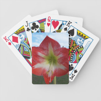 106a Amaryllis red and white MegaStar2 Bicycle Playing Cards