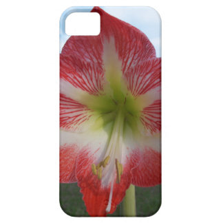 106a Amaryllis red and white MegaStar2 Case For The iPhone 5