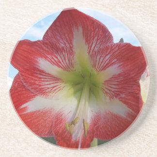 106a Amaryllis red and white MegaStar2 Coaster
