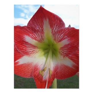 106a Amaryllis red and white MegaStar2 Letterhead