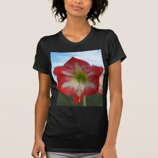 106a Amaryllis red and white MegaStar2 T-Shirt