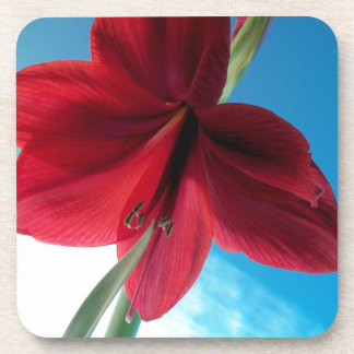 108a Vivid red Amaryllis Flower Coaster