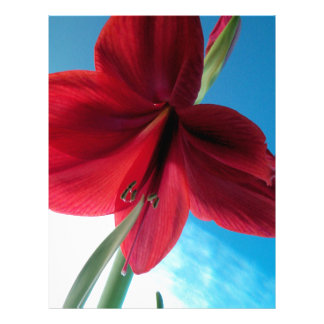 108a Vivid red Amaryllis Flower Letterhead