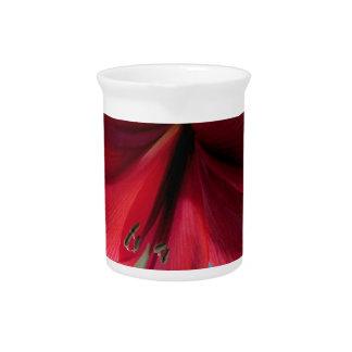 108a Vivid red Amaryllis Flower Pitcher