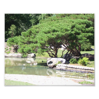 """10"""" x 8"""" beautiful tree leaning over a pond photo print"""