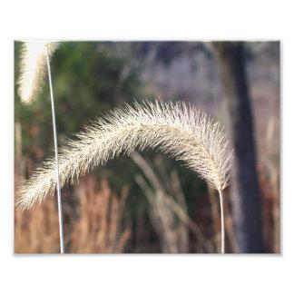 """10"""" x 8""""  photograph of swamp grass"""