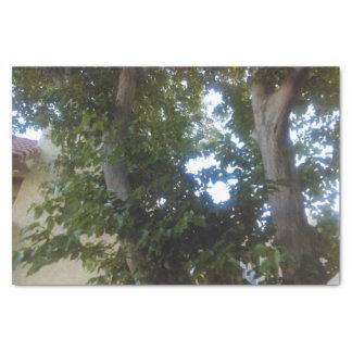 10lb tissue paper tree design