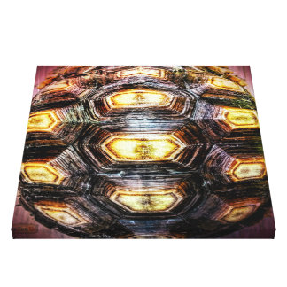 10th Pattern; Turtle Highlights Canvas Print