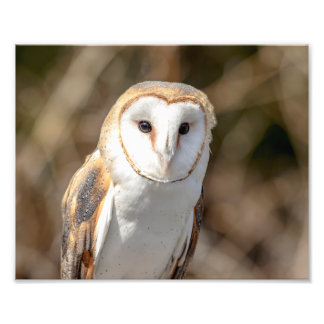10x8 Barn Owl Art Photo