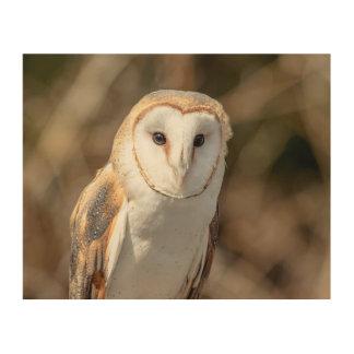 10x8 Barn Owl Wood Wall Art