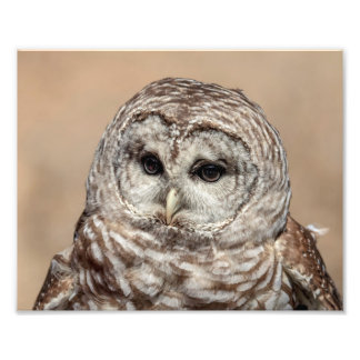10x8 Barred Owl Photo Print
