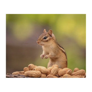 10x8 Chipmunk with peanuts Wood Wall Decor