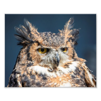 10x8 Great Horned Owl Portrait Photo Print