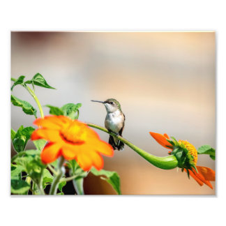 10x8 Hummingbird on a flowering plant Photo Print