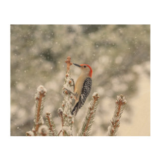 10x8 Red-bellied Woodpecker in the snow Wood Wall Decor