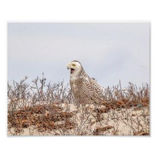 10x8 Snowy owl sitting on the beach Photo Print