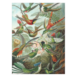 12 american humming birds breeds painted drawn tablecloth