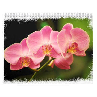 12 Months of Beautiful Orchids Wall Calendar