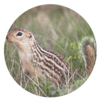 13 stripe ground squirrel dinner plate