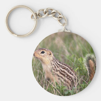 13 stripe ground squirrel keychain