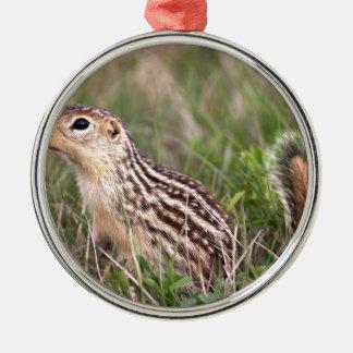 13 stripe ground squirrel metal ornament