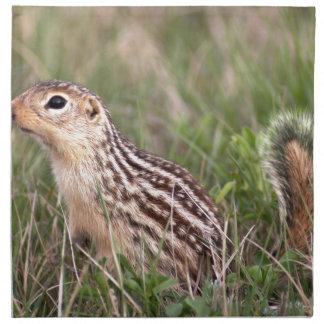 13 stripe ground squirrel printed napkin