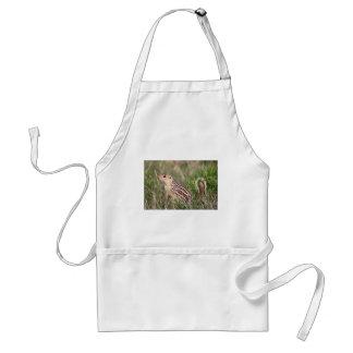 13 stripe ground squirrel standard apron