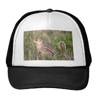 13 stripe ground squirrel trucker hat