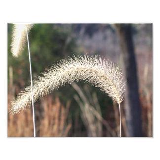 """14"""" x 11"""" photograph of swamp grass"""