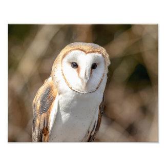 14x11 Barn Owl Photo Print