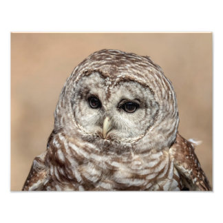 14x11 Barred Owl Photograph
