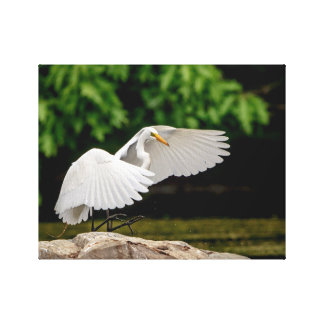 14x11 Great Egret Canvas Print